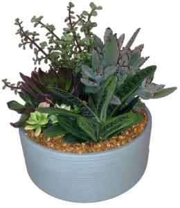 Simply Succulent Garden