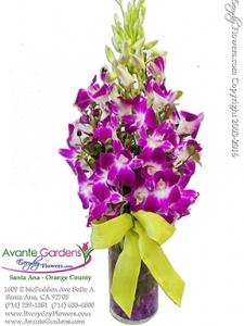 Monet's Orchids