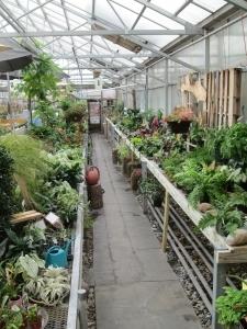 Living Green Plant