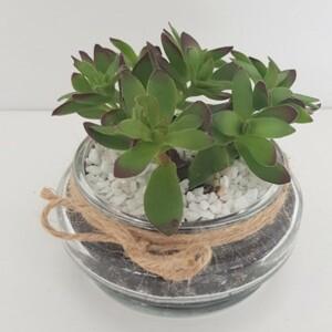 Succulent Terrarium Living Plant