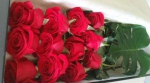 Dozen Rose Box