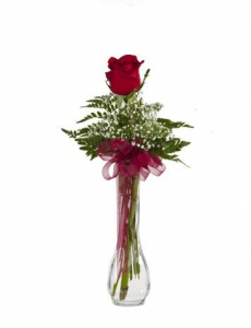 Single Rose In Vase