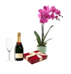 Special Plant Gift Set