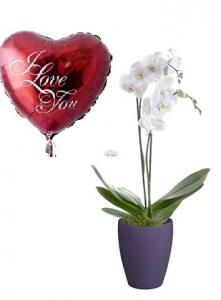 2 Stalks Orchid +Balloon