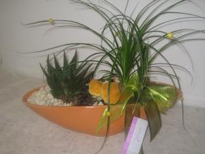 Nolina Cactus Orange