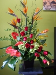 Tropical Sympathy Arrange
