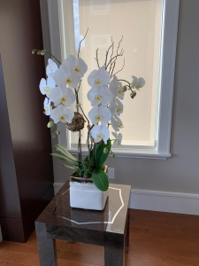 Double Stems White Orchid