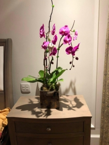 Two Stems Purple Orchids