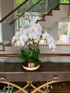 5 Stems White Orchids