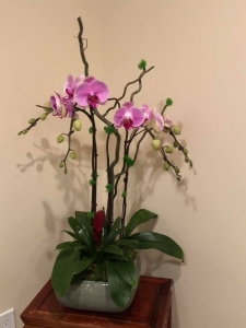 Lovely Orchids Plants