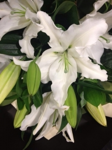 Lovely Scented Lilies