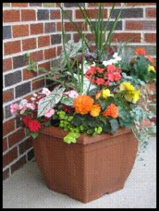 Colourful Planter