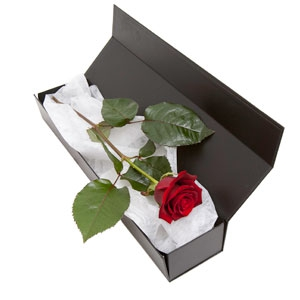 Single Red Rose Lasts 1yr