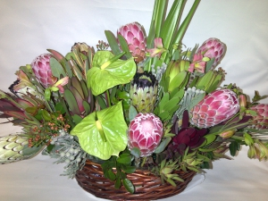 Exotic Protea