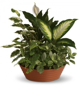 Plant Basket With Silks