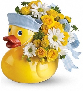 Sailor Duck - Boy