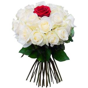 24 White & 1 Red Roses