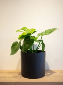 Plant - Small