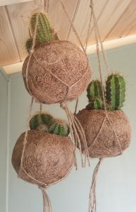 Trio Of Houseplants