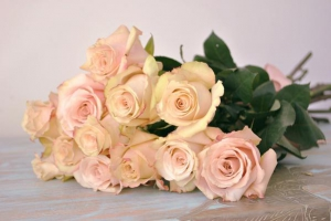 Roses Pink X6 Stems