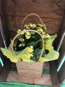 Summery Kalanchoe Plant