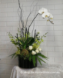 Phalaenopsis Kokedama