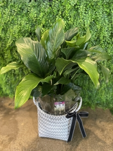 Peace Lilly In Basket