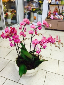 KingED's Orchid Pot