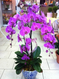 KingEd's Orchid Pot 2