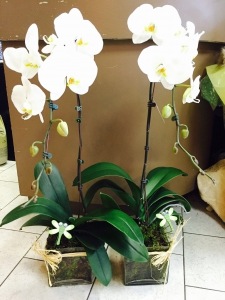 KingED's Orchid Pot 5