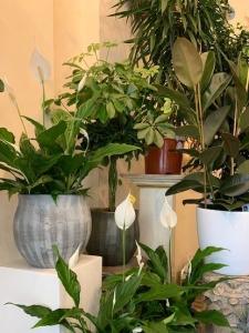 Large Indoor Plants