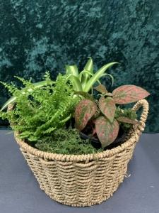 Mixed Indoor Plant Basket