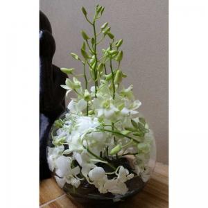 Orchid Twist