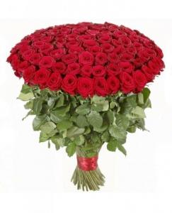 Hundreds Roses