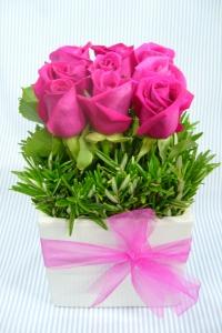 Box Hedge Roses