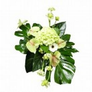 Anthurium Arrangement