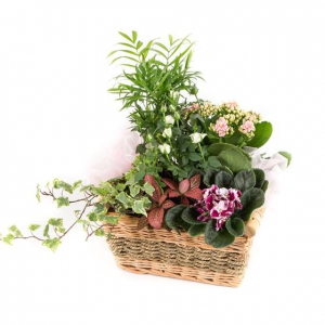 Planted Basket