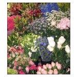 Florist Choice Funeral BQ