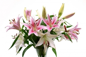 IT13 - Bouquet Of Lilies