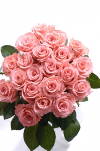 IT19 - Pink Roses