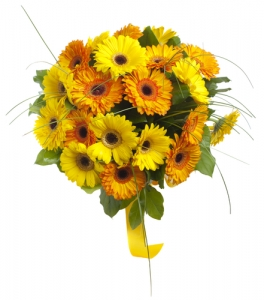 IT31 - Yellow Gerbera