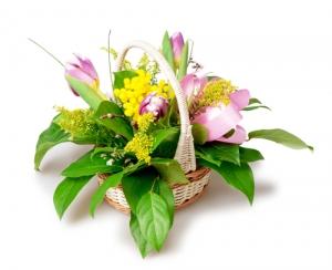Basket Of Tulips & Mimosa