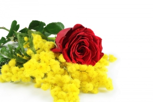Red Rose And Mimosa