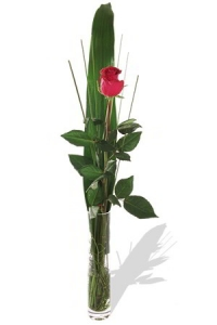 Single Red Rose In Vase