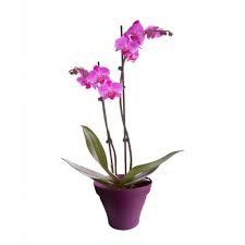 Belle Orchidée 3 Branches
