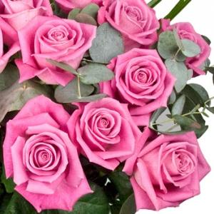Luxury Dozen Pink Roses