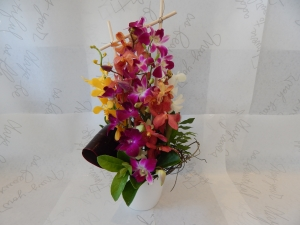 Orchid Box Arrangement