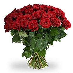 12 Long Red Roses