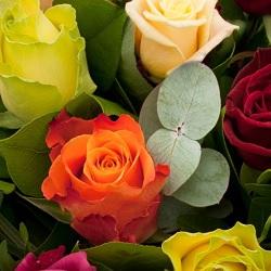 Rose Choice