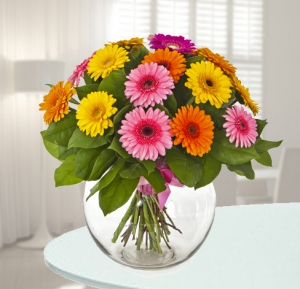 Colorful Gerberas